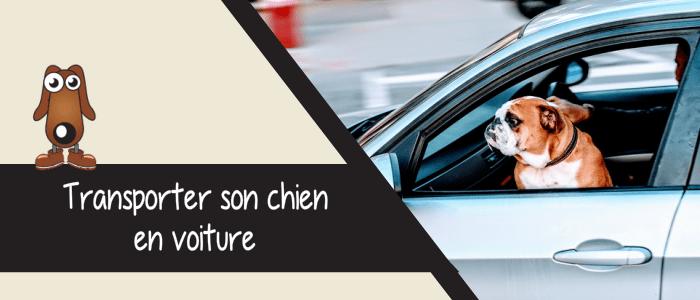 Comment transporter son chien dans la voiture ?