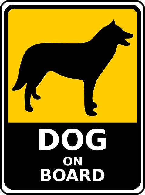 voyage chien seul